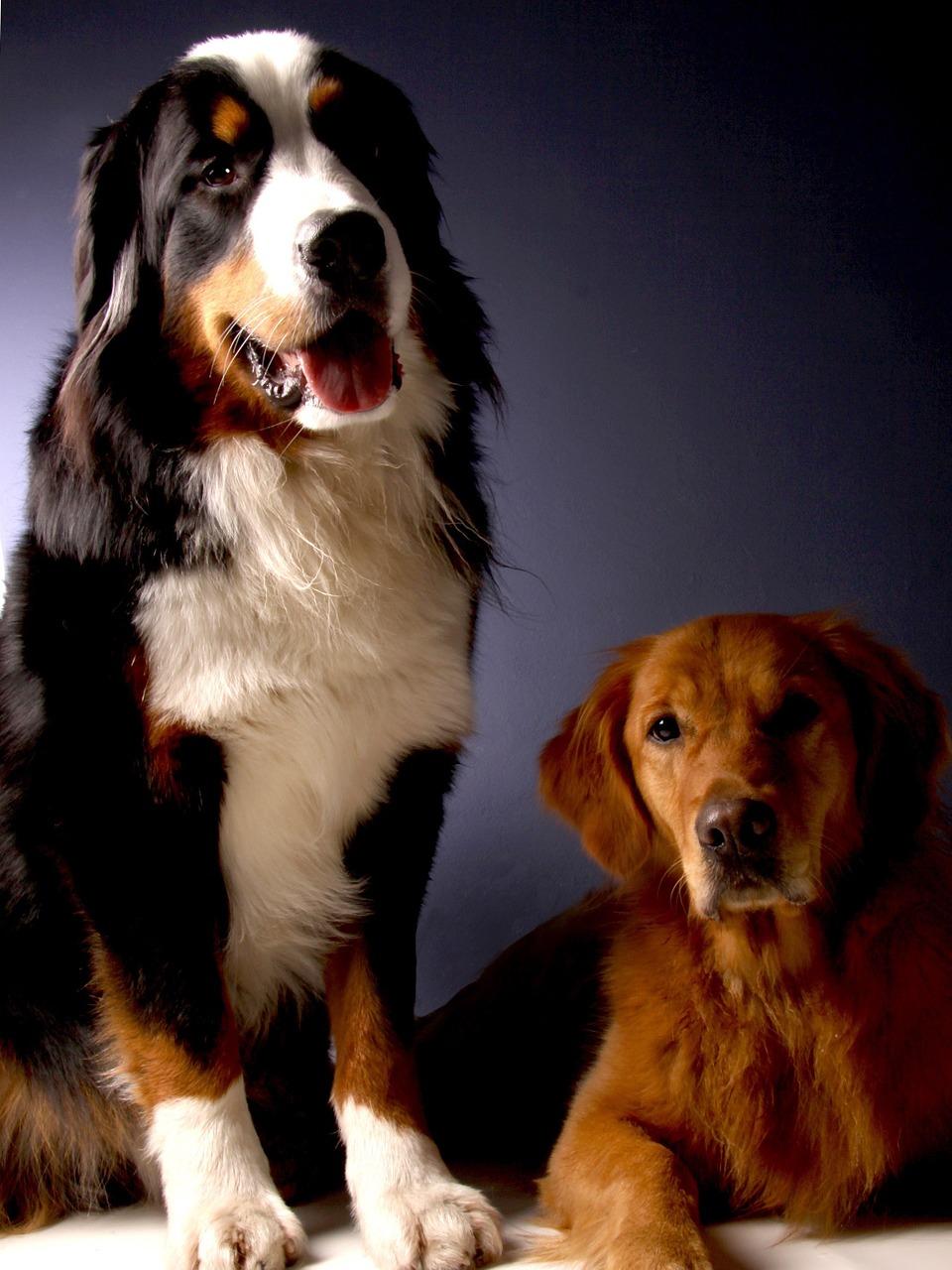 revisiones salud perros