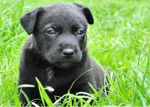 esterilización en cachorros