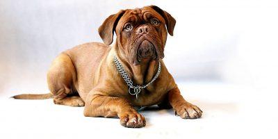 esterilización mascotas