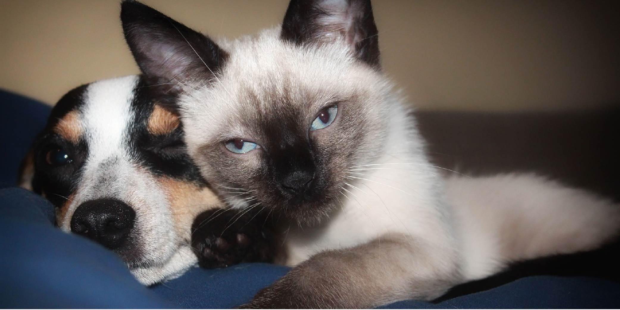 higiene mascotas