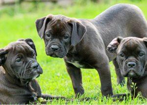 identificación cachorros perros