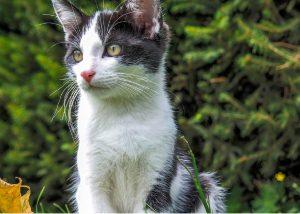 vacunación en gatos