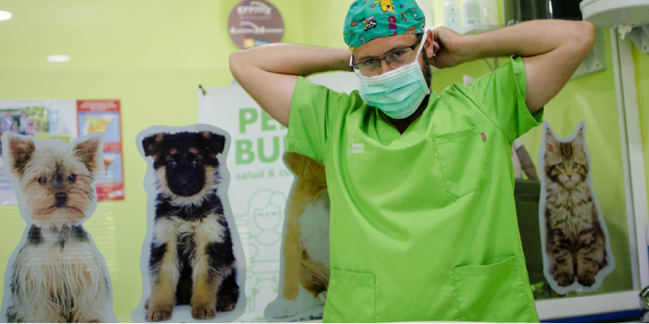 cirugía mascotas