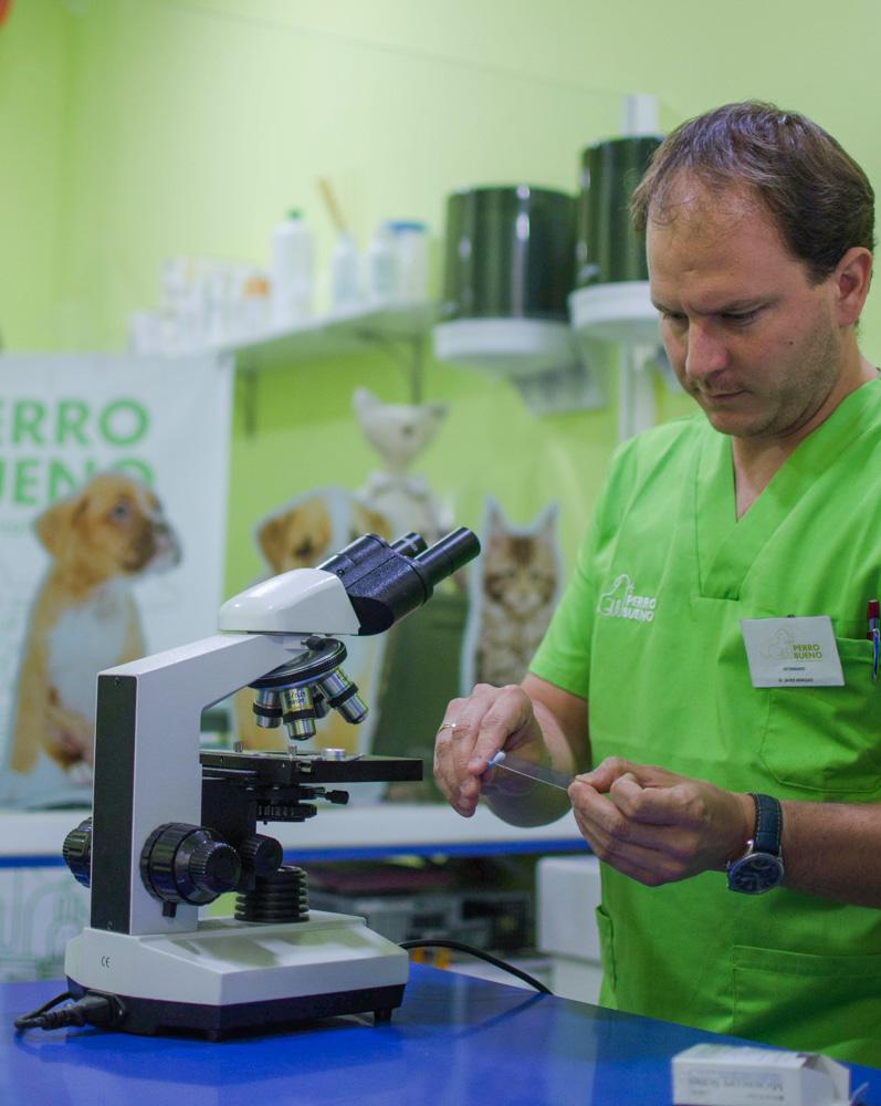 dermatología animal